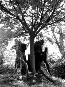 arbre mort jeune arbre
