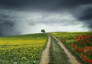 chemin champs
