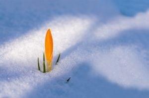 fleur neige lumière