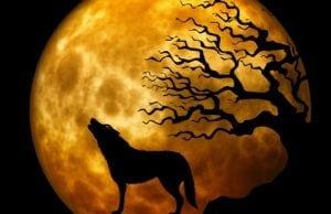 loup prédateur